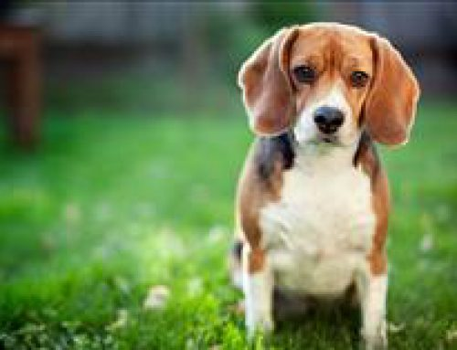 Study: Cancer-Linked Herbicide Found in Dogs