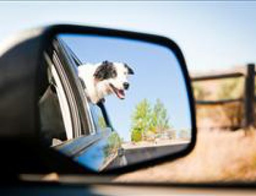 Top Ten Safest Cars for Pets